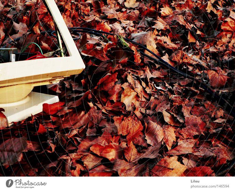 Gefallen. weiß rot Blatt gelb Herbst Computer braun Kabel kaputt Müll Bildschirm Jahreszeiten abwärts Zerstörung mögen