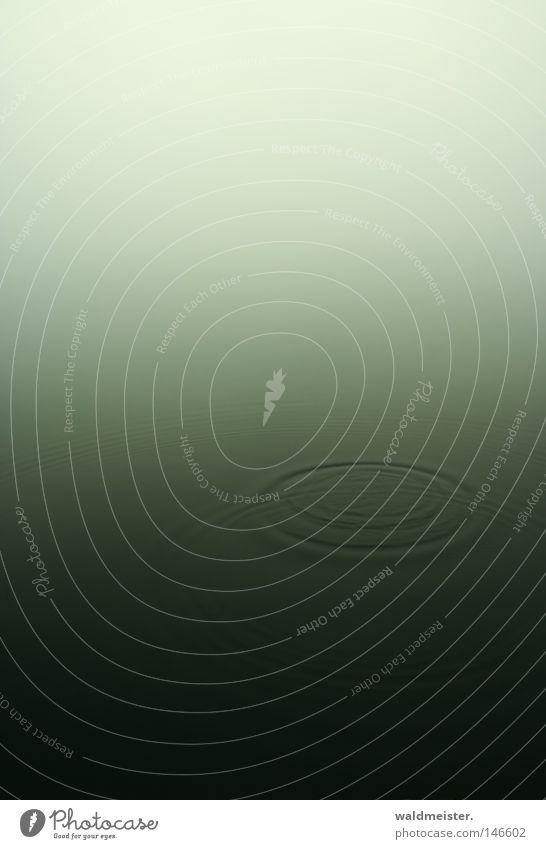 See im Nebel Natur Wasser ruhig Wellen Kreis Frieden sanft Angeln harmonisch friedlich Gewässer Textfreiraum unberührt