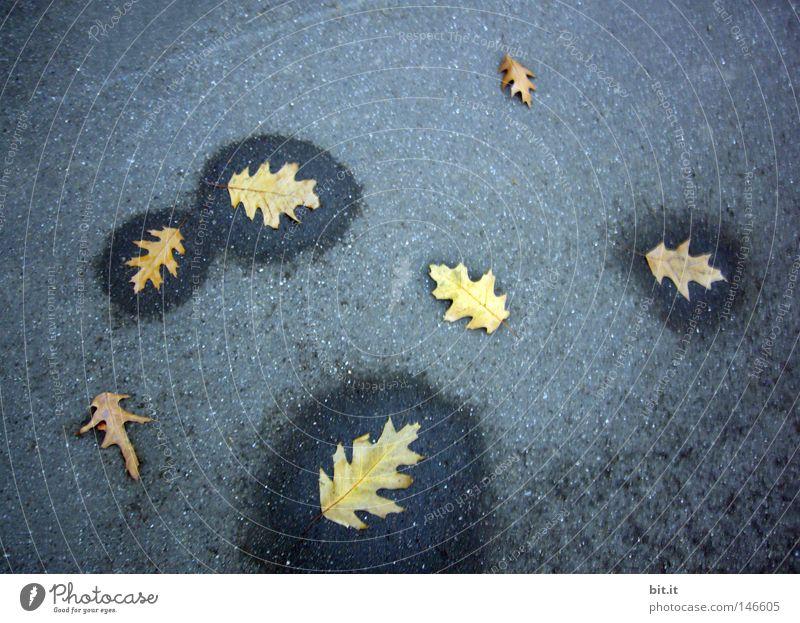 EICHENBLATT-NASS-TROCKEN Asphalt Blatt feucht Herbstlaub welk herbstlich Herbstbeginn umrandet Eichenblatt