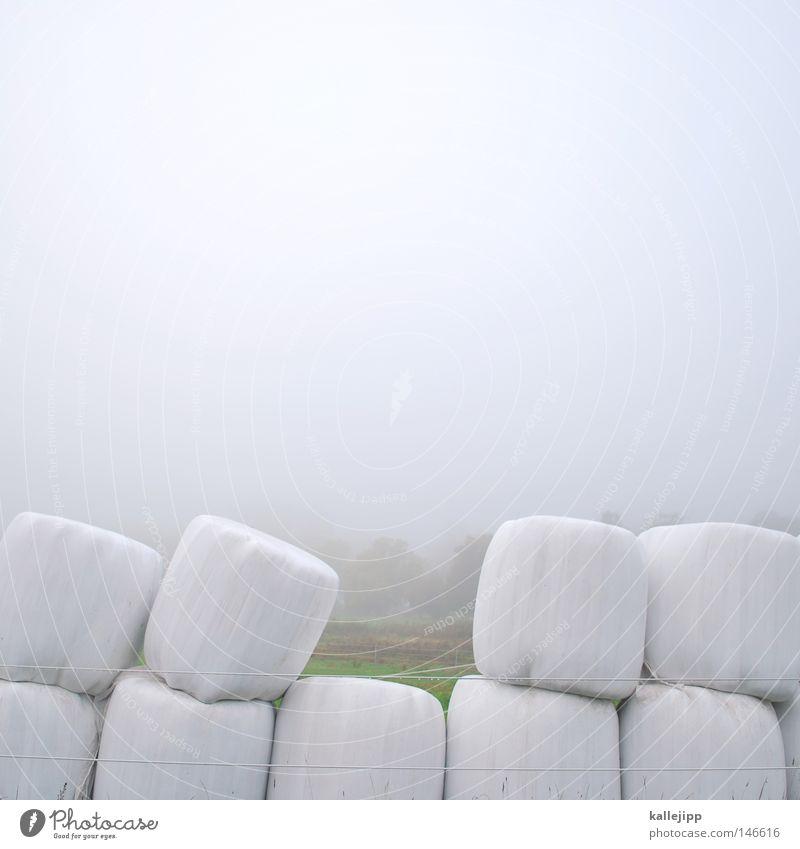 zahnlücke Feld Landwirtschaft Heu Stapel weiß Brandenburg Nebel Herbst Ernte Kreis rund Wiese Morgennebel Jahreszeiten leer Zahnlücke Gebiss Zähne Heuernte