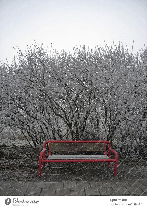Rot (die Parkbank) Pflanze rot Winter Ferien & Urlaub & Reisen Einsamkeit kalt Schnee Traurigkeit frisch Trauer Frost Insel Bank Sträucher Fell Verzweiflung