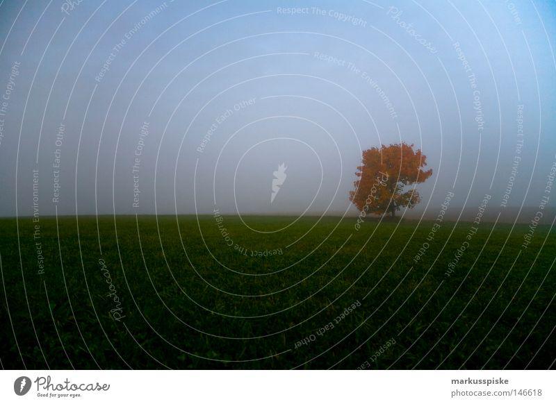 nebel herbst Himmel Baum grün rot Blatt Wolken Herbst Wiese Stimmung Nebel