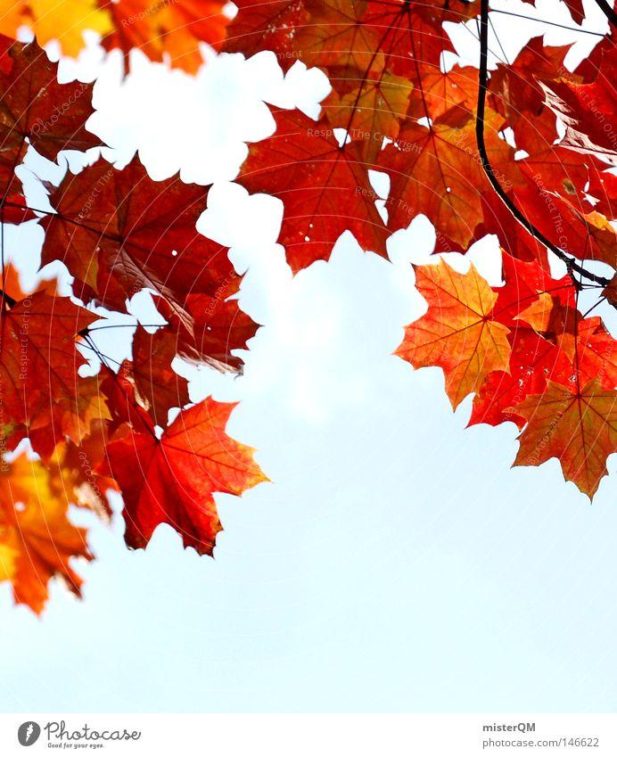 Wer wird denn gleich rot werden - Herbsttag Blatt Natur rein schön ästhetisch mehrfarbig blau Himmel Schönes Wetter Wind Blätterdach grün Blattgrün Ende
