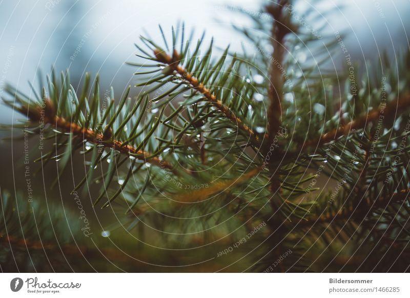 there is.. Natur Pflanze Wassertropfen Winter Regen Baum Blatt Wald nass blau grün Gesundheit Gesundheitswesen Idylle ruhig Tanne Tannennadel Nadelbaum