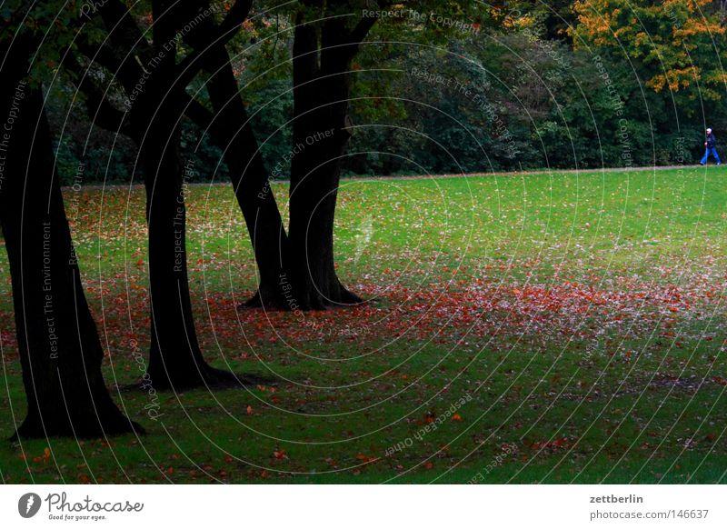 Hasenheide Natur Ferien & Urlaub & Reisen Blatt Erholung Herbst Garten Wege & Pfade Park klein wandern laufen Laufsport authentisch Vergänglichkeit