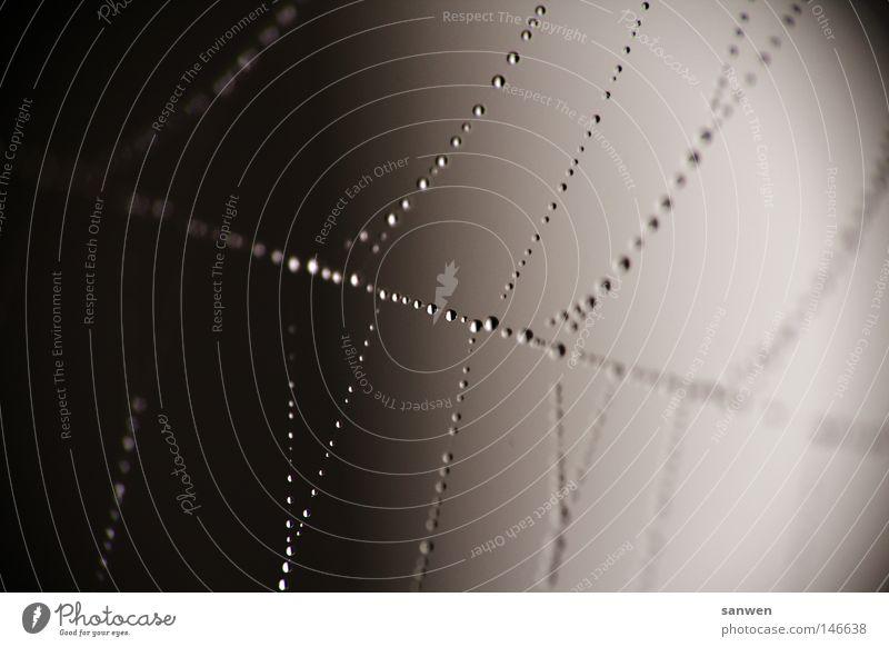 aufgeperlt Spinne Wohnung Wassertropfen Regen Nebel Morgennebel Tau hängen hängend Stoff Spinngewebe spinnenetz Netz spinnenwohnung Netzwerk netzbahnen