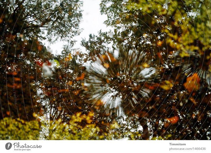 Splash naturelle. Umwelt Natur Wasser Schönes Wetter Baum Laubbaum Blatt Wald natürlich braun grün Reflexion & Spiegelung spritzen Farbfoto Außenaufnahme