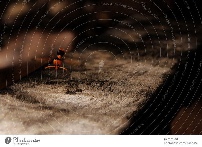 don't stop Tier Holz orange fliegen Insekt Schweben