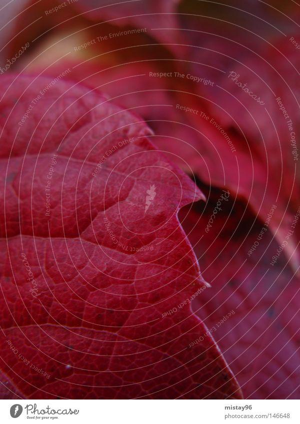schön Pflanze rot Blatt Herbst Park
