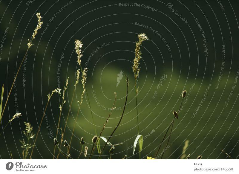AUTUMN II grün Herbst Wiese Gras Ausflug zart Halm sanft Lenkdrachen Sonntag