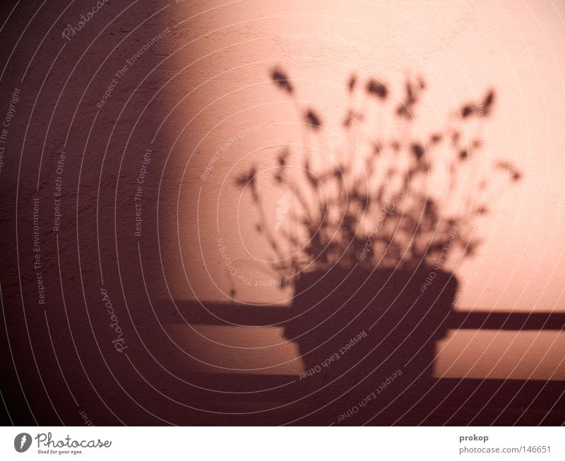 Ton, Steine, Scherben Sonne Blume Pflanze Sommer ruhig Herbst Frieden einfach Balkon Stillleben Geländer Blumentopf simpel friedlich bescheiden konservativ