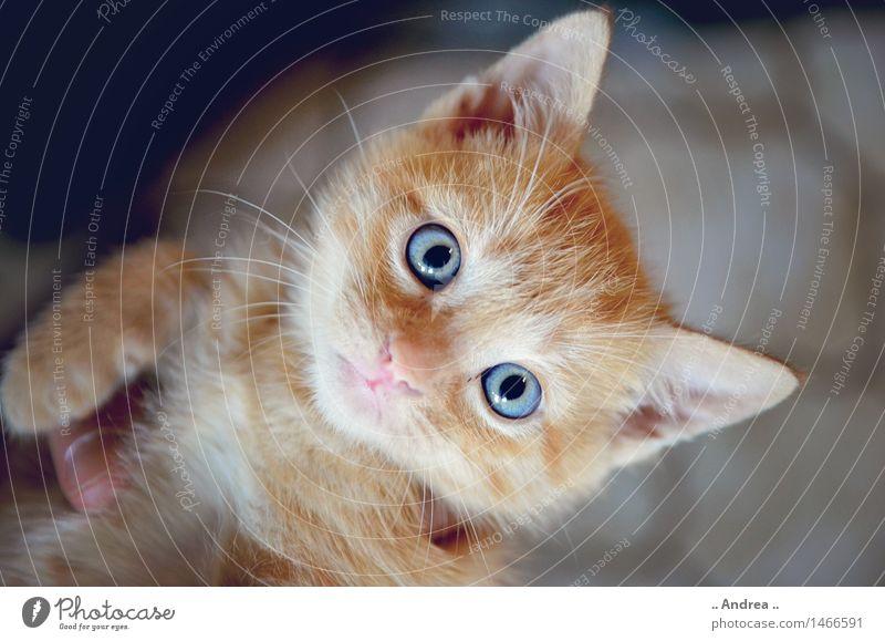 Fiffi 3 Katze rot Tier Tierjunges orange niedlich Neugier Haustier Tigerfellmuster Tigerkatze