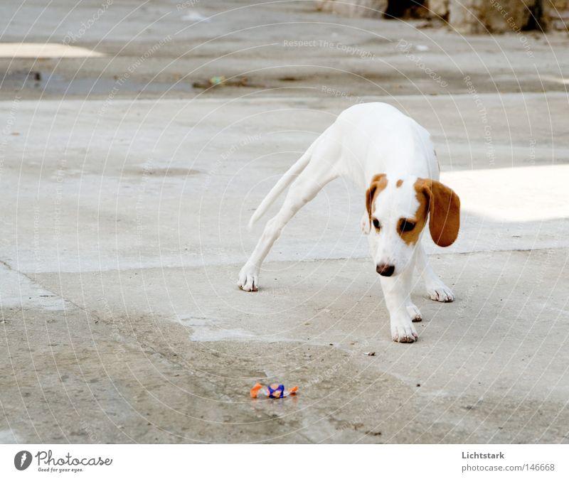 bleib mir fern II weiß Freude Tier Gefühle Bewegung Hund braun gefährlich stehen Fell Duft Bürgersteig Verkehrswege Panik Pfote Haustier