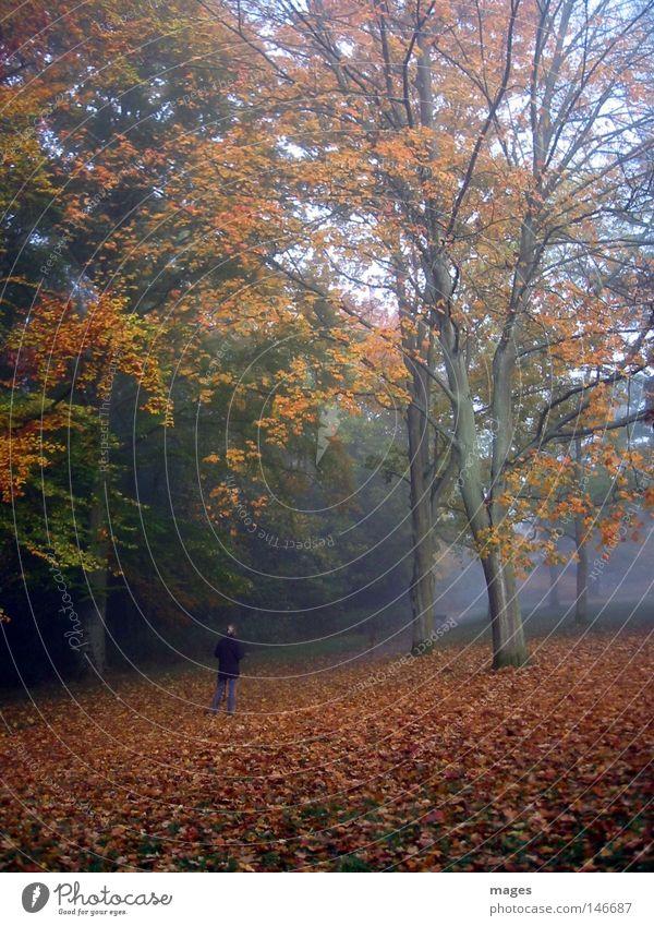 Morgenlauf Hund Baum Blatt Wald Herbst Spielen Nebel laufen Laufsport feucht Herbstlaub Joggen