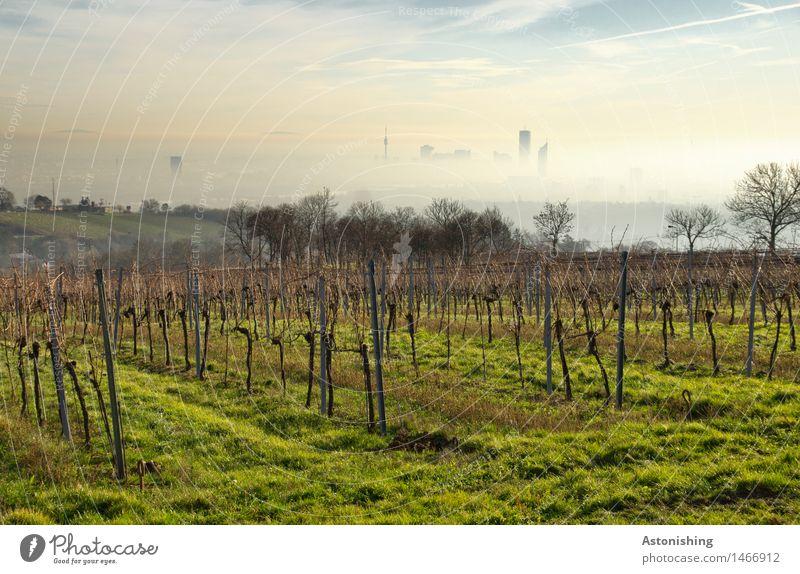 am Cobenzl Umwelt Natur Landschaft Pflanze Luft Himmel Wolken Horizont Herbst Wetter Schönes Wetter Nebel Gras Sträucher Hügel Wien Österreich Stadt Hauptstadt