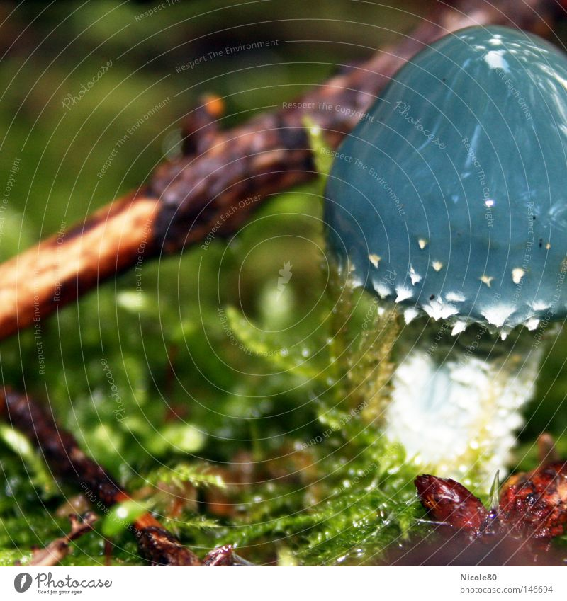 blue mushroom blau grün Herbst Wassertropfen Frieden Pilz friedlich Waldboden