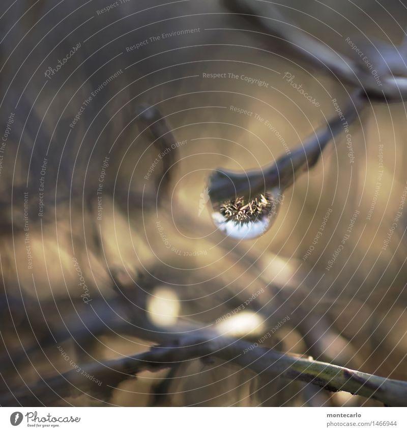 im strauch Umwelt Natur Pflanze Wasser Wassertropfen Himmel Klima Schönes Wetter Sträucher Grünpflanze Wildpflanze Topfpflanze Spiegelbild beobachten entdecken