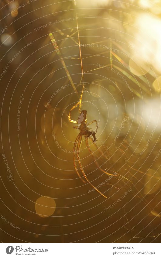 bitte nicht stören... Umwelt Natur Tier Nutztier Wildtier Spinne 1 Spinnennetz ästhetisch dünn authentisch elegant einzigartig klein listig nah natürlich
