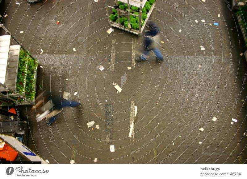 Aalsmeer Mensch Blume Arbeit & Erwerbstätigkeit Bodenbelag Handel Halle Niederlande Versteigerung