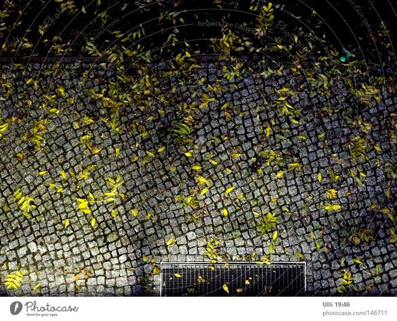 Aus dem Fenster hängen. Herbst Wetter Blatt Herbstlaub Menschenleer Bürgersteig Verkehrswege Straße Stein dunkel trist ruhig Fußweg Pflastersteine Straßenbelag