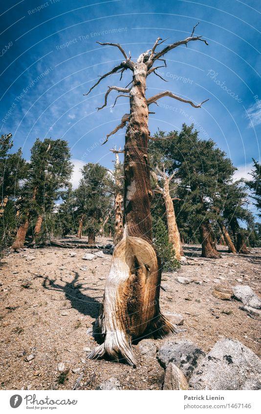 Wegweiser Ferien & Urlaub & Reisen Ausflug Abenteuer Ferne Sommer Berge u. Gebirge wandern Umwelt Natur Landschaft Urelemente Himmel Klima Klimawandel Pflanze