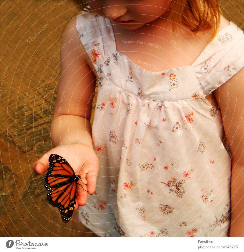 Flieg kleiner Schmetterling - oder ein kleines Mädchen hält ganz vorsichtig einen kleinen Schmetterling, der sich auf ihr ausruht Farbfoto Innenaufnahme Tag