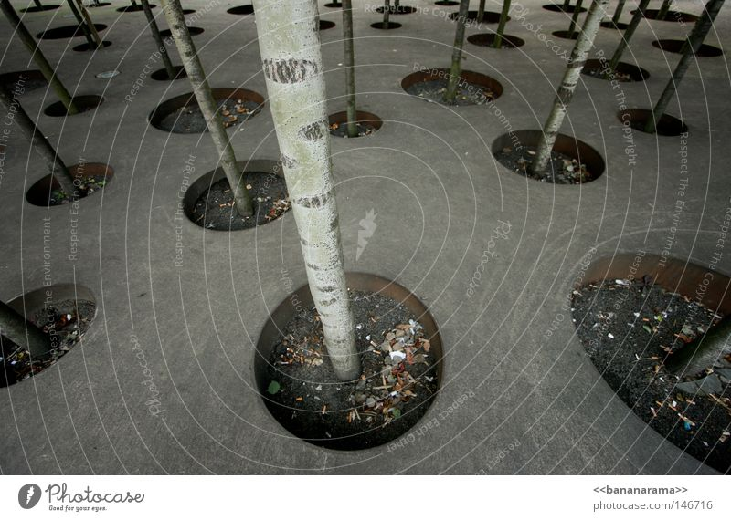 Jedem Baum sein' Lebensraum Straße Wald Linie Kunst Design Beton Kreis modern Platz rund Bodenbelag Kultur Punkt Mitte
