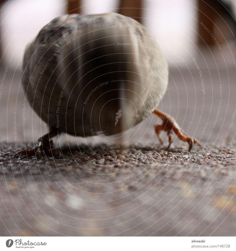 Friss oder stirb, kleiner Vogel! Ferien & Urlaub & Reisen Vogel Appetit & Hunger Café Fressen Schnabel Futter Spatz Krallen stechen Krümel picken