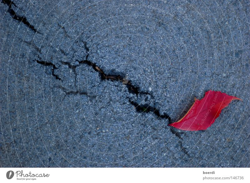 aUswuchs rot grau Blatt Herbst mehrfarbig Farbe intensiv Spalte Asphalt Beton Boden Riss Zerreißen außergewöhnlich fallen Einsamkeit unten abwärts Mahlzeit