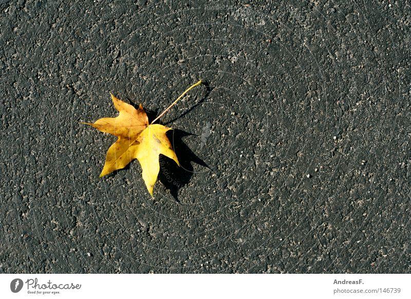 Ahorn Ahornblatt Herbst Herbstbeginn Herbstlaub Herbstfärbung Bürgersteig Straße Asphalt Straßenbelag einzeln Kanada porig Pore Stein Farbfleck Oktober