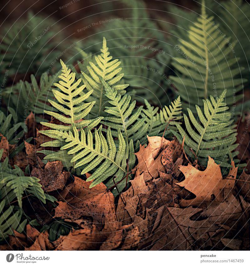 oh wandelbaum... Natur Pflanze Baum Blatt Winter Umwelt Leben Herbst Frühling Stimmung Park Erde Beginn Klima Zeichen Urelemente