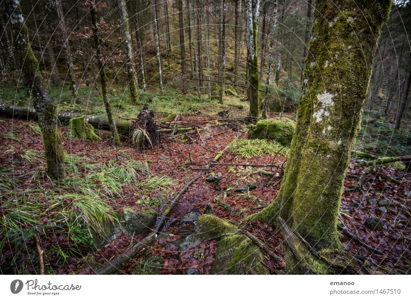 Wintermooswald Natur Ferien & Urlaub & Reisen Pflanze grün Baum Landschaft Wald Berge u. Gebirge kalt Herbst Gras natürlich braun Felsen wandern