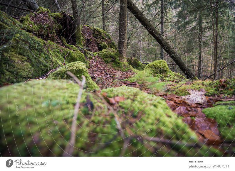 Schwarzwald Ferien & Urlaub & Reisen Tourismus Berge u. Gebirge wandern Umwelt Natur Landschaft Pflanze Herbst Baum Moos Wald Urwald Hügel Felsen frisch kalt