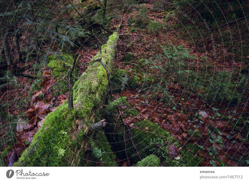 untouched Berge u. Gebirge wandern Umwelt Natur Landschaft Pflanze Erde Herbst Klima Baum Sträucher Moos Blatt Wald Urwald alt dunkel natürlich grün Bannwald