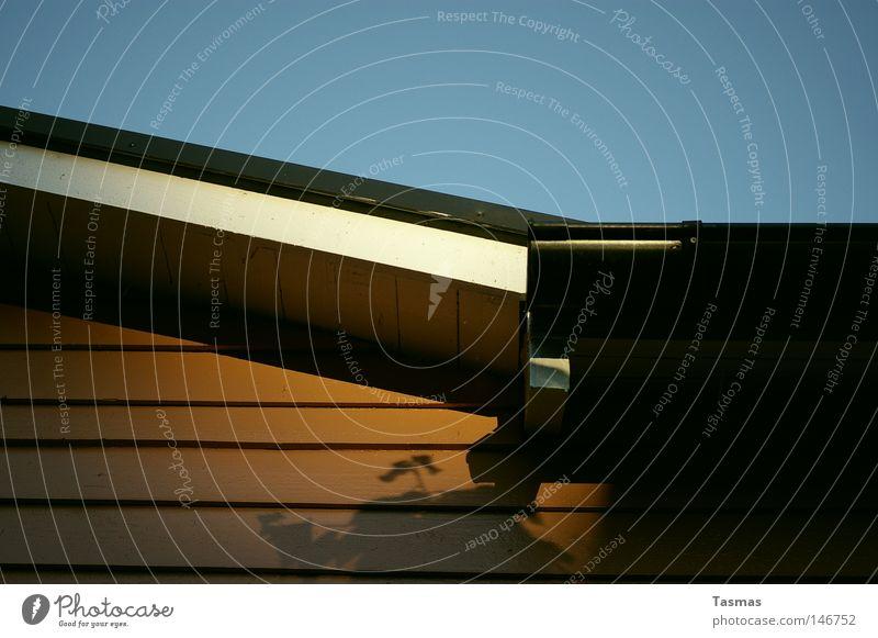Wand Schatten Gewächs Zufriedenheit Ferien & Urlaub & Reisen Pflanze Dach Holz Stimmung Palme Abendsonne Schweden Ich will buäää Wiederholung Detailaufnahme