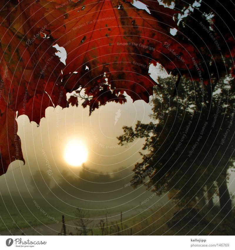 vierzehnter oktober Herbst Jahreszeiten Heimat Brandenburg Nebel Morgen Stimmung Wege & Pfade Licht Sonne Stern Morgennebel Blatt Natur Landschaftsformen rot