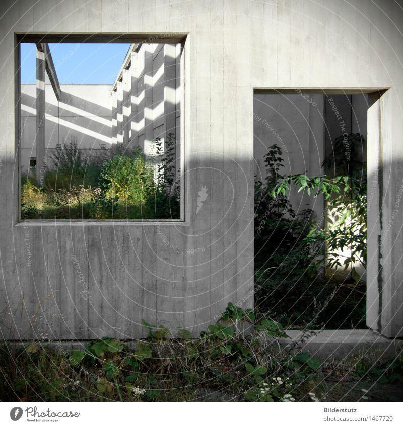 Rooms Natur Pflanze grün Einsamkeit ruhig Wand Architektur Innenarchitektur natürlich Gebäude Mauer grau Kunst Garten außergewöhnlich träumen