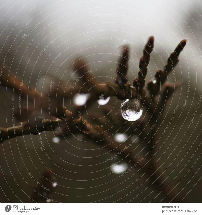 klarheit in sicht Natur alt Pflanze Wasser Blatt dunkel kalt Umwelt natürlich klein braun wild frisch trist authentisch Sträucher