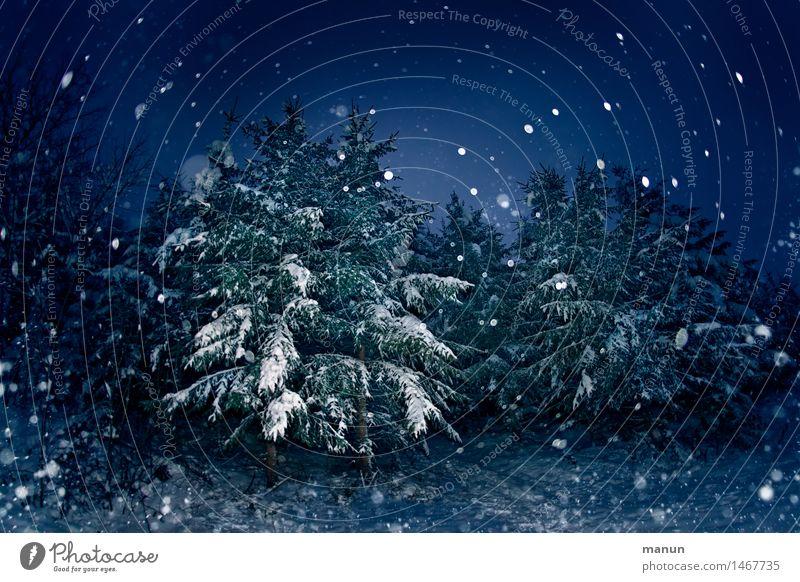 Schnee von vorgestern Natur Weihnachten & Advent blau Baum Winter dunkel Wald natürlich Feste & Feiern Schneefall Eis authentisch Frost Silvester u. Neujahr