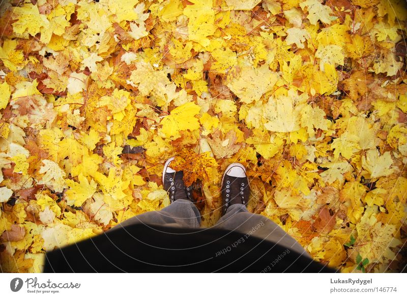 Gelbes Meer Blatt gelb kalt Herbst Fuß Schuhe Beine braun Wind nass Bodenbelag Show Hose Jahreszeiten Top Chucks