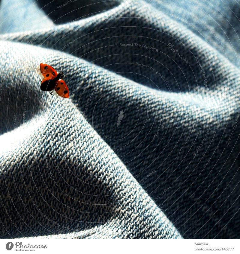 Star Wars der Tiere Käfer Jeanshose Jeansstoff Hose Marienkäfer Punkt Schatten Stoff Licht Leben kämpfen Flucht fliegen klein gepunktet orange frei Freiheit