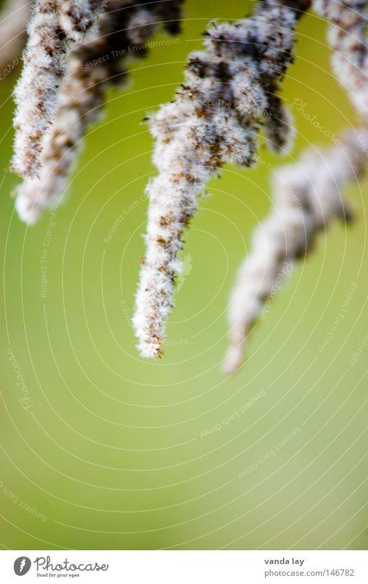 Zapfenstreich Natur grün schön Pflanze Blume ruhig Schnee Herbst Hintergrundbild Spitze weich nah Blühend Dame herbstlich Wolle