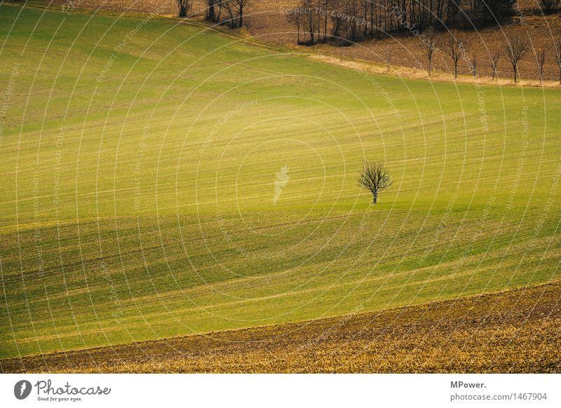 ein baum Umwelt Natur Pflanze Baum klein Feld Grasland Herbst karg einzeln Ackerbau Farbfoto Außenaufnahme Menschenleer Textfreiraum links Textfreiraum Mitte