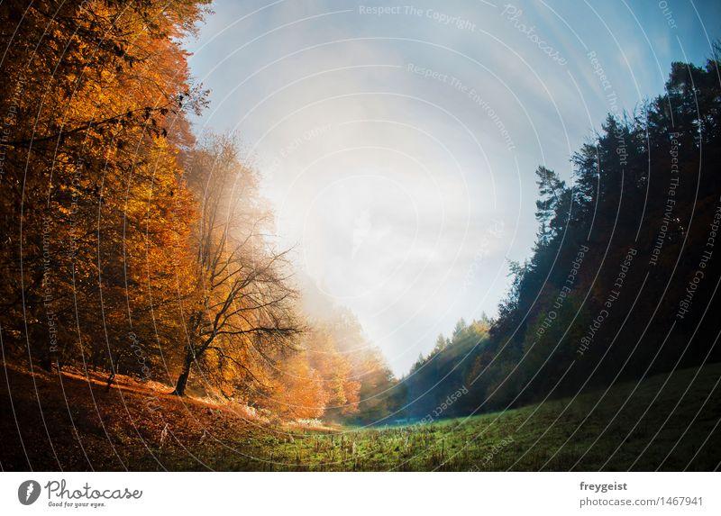 2 Worlds in 1 Natur Landschaft Pflanze Himmel Sonne Sonnenlicht Herbst Wetter Schönes Wetter Nebel Baum Gras Wiese Feld Wald Hügel Erholung genießen