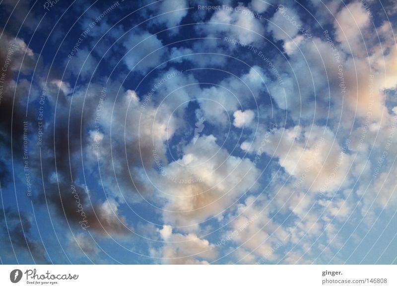 Wolkenflöckchen Himmel blau weiß dunkel oben grau hell rosa hoch Textfreiraum Abenddämmerung aufwärts Höhe Flocke Wolkenhimmel