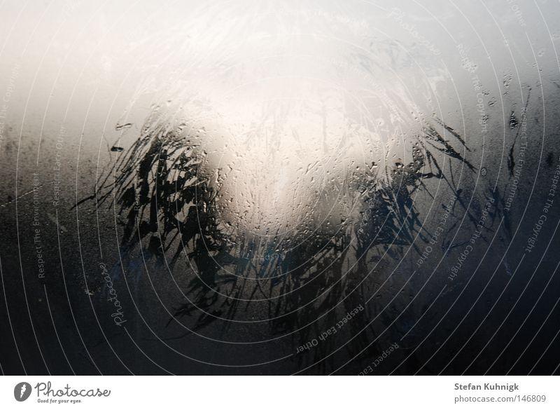 morgentlicher Haarabdruck hauchen Atem atmen feucht Fenster Sonnenaufgang Muster filigran dunkel Wasser Haare & Frisuren Morgen Wassertropfen Abdruck Tropfen