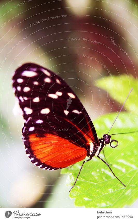 rolle Natur Pflanze Tier Baum Sträucher Blatt Garten Park Wiese Wildtier Schmetterling Tiergesicht Flügel Facettenauge Rüssel Fühler Beine 1 beobachten Erholung