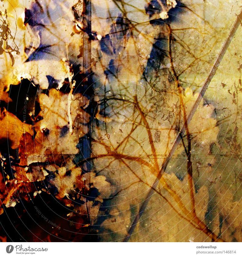 s'herbst Blatt Herbst Herbstfärbung Laubbaum Natur braun September Oktober reflection leaf deciduous structure Strukturen & Formen autumn autumnal season