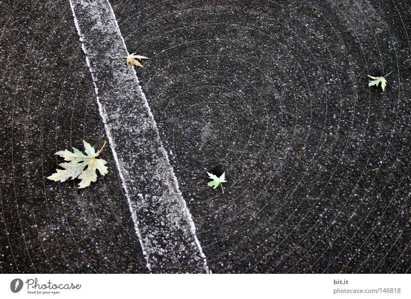 DREI ZU EINS weiß Blatt Straße Herbst grau Linie trist Asphalt Streifen Verkehrswege Grauwert