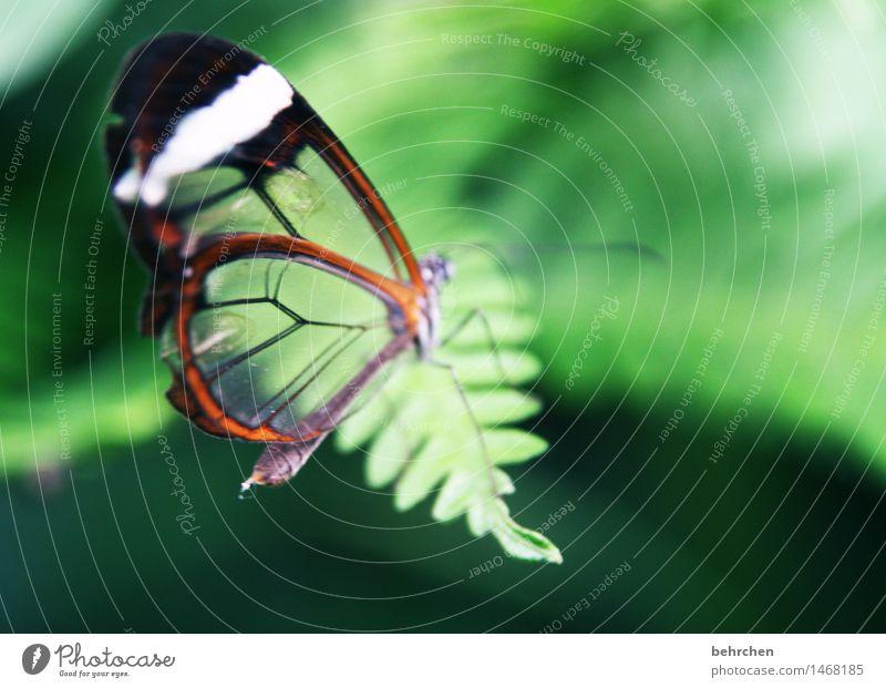 glas Natur Pflanze Tier Frühling Sommer Farn Blatt Garten Park Wiese Wildtier Schmetterling Flügel glasflügelfalter 1 beobachten Erholung fliegen Fressen